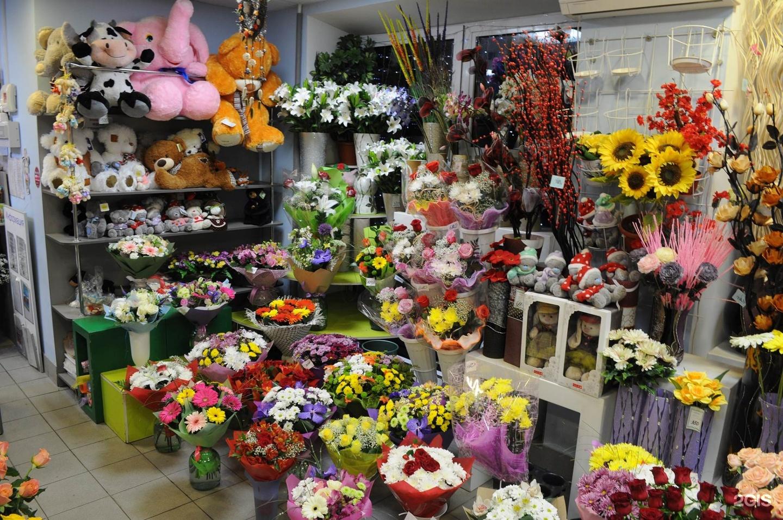 Цветов ромашки, мир цветов магазинов в челябинске