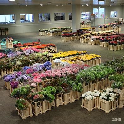 Совхоз имени ленина цветы оптом и розницу в горшках, фруктов