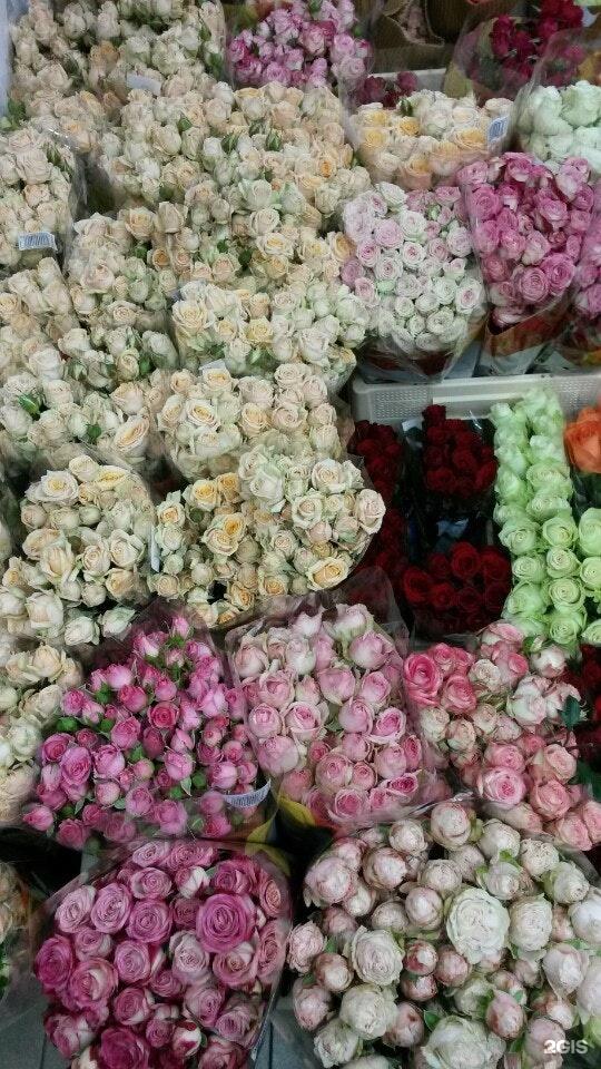 Цветы оптом город днепропетровск купить, роза каплями росы