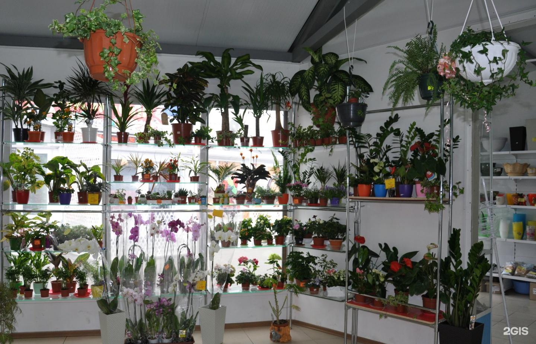 Сеть магазины цветов иваново, для невесты