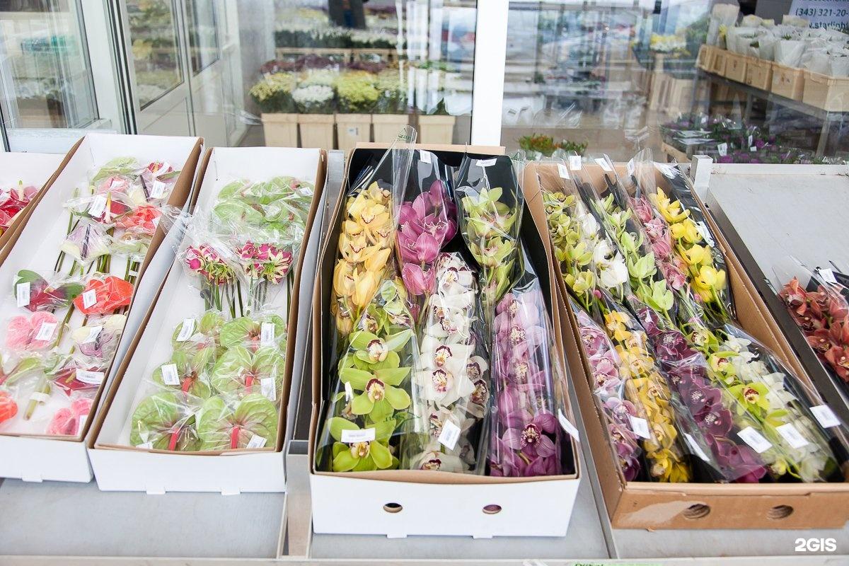 Цветы оптом курске, букет франшиза цветы